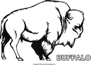 Native American Coloring Fun - Buffalo